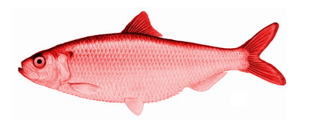 red_herring